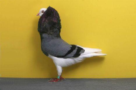 32c20bc8d5f04a6b44afc0981f76b8d4--dutch-bird-watching